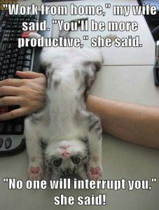 kitten meme working from home
